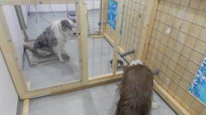Spielmarken-Test: Bekannte Hunde erhielten öfter ein Leckerli vom Artgenossen. Foto: Mylene Quervel-Chaumette/Vetmeduni Vienna